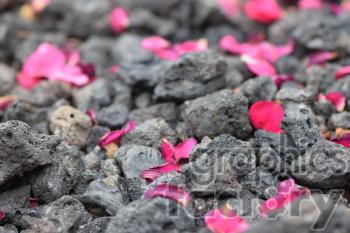 red peddles on lava rocks