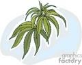 marijuana plant  gif, png, jpg, eps